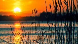 sunsetting over water with reeds